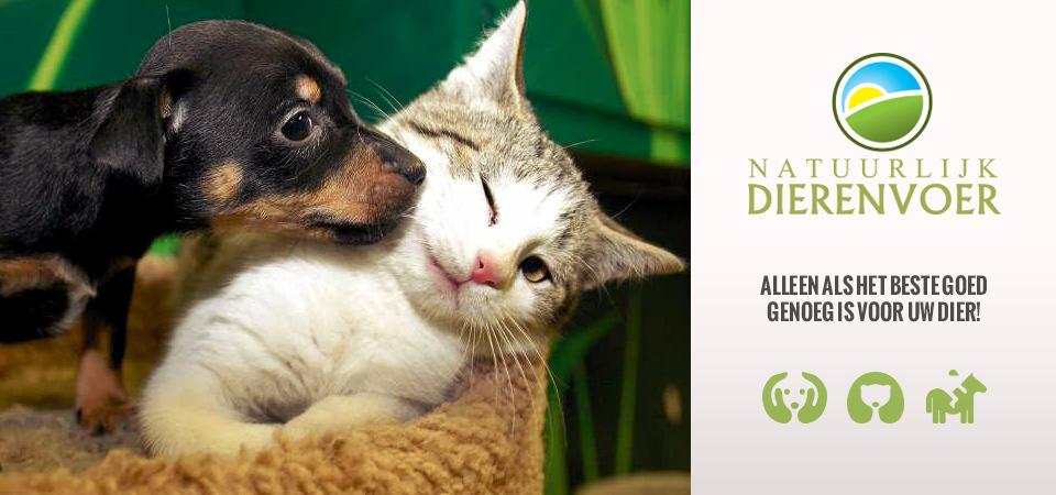 hond kat poes paard gezonde voeding voer voedsel gezond biologisch
